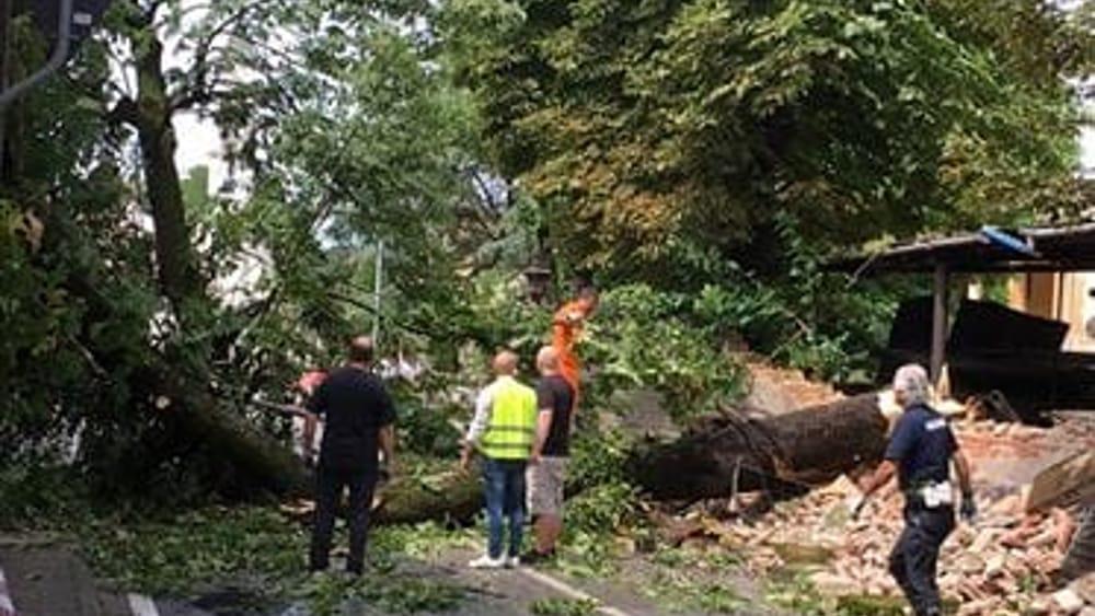 Monticello Conte Otto, albero caduto in strada: circolazione bloccata - VicenzaToday