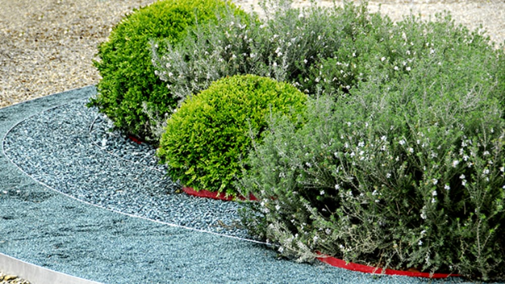Prato e arbusti fioriti dell 39 ortogiardino funzioni e for Arbusti fioriti perenni